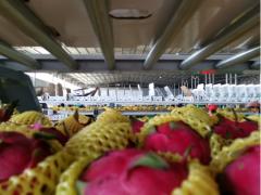 菜鸟加快农货上行  万吨火龙果从原产地直发全国