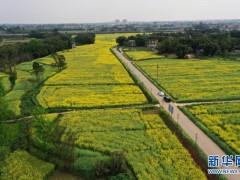 重庆大足春景美